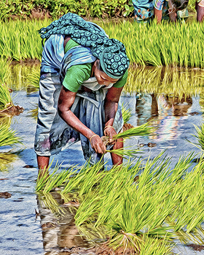 """The Rice Planter,"" Digital Special Effects, Vandy Vandervort"