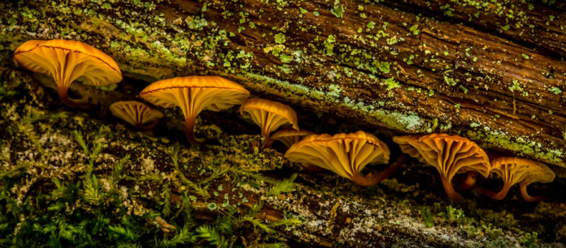 "Honorable mention, Print Special Topic, ""Mushroom Row,"" Kirk Fry"