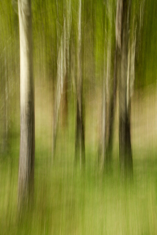 "Award, Digital Special Effects, ""Aspen in Spring,"" Cal Whitehall"