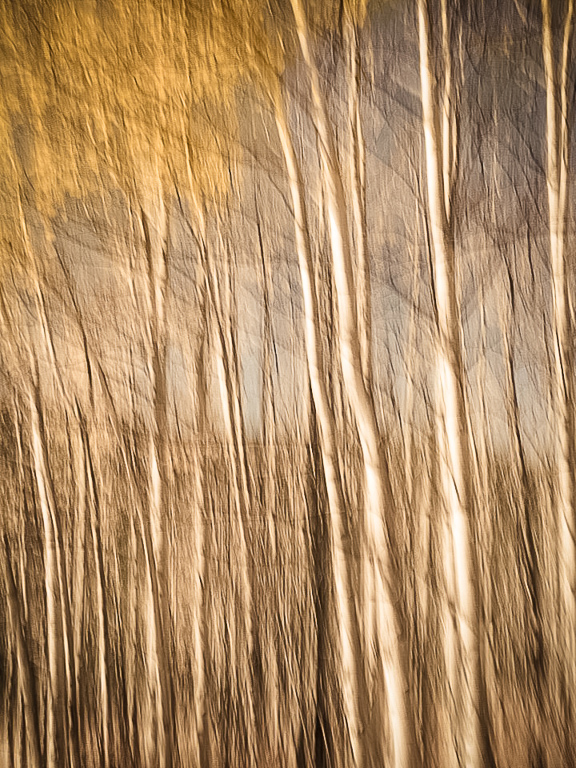 """Award, Digital Special Effects, """"""""Aspen Abstract (Homage to Cal Whitehall),"""" Cary Wolfson"""