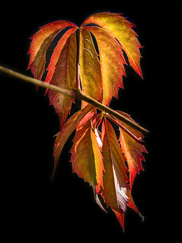 """Award, Print Special Topic, """"Fall Ivy,"""" Bruce Henderson"""